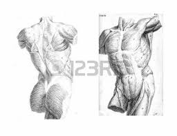 dissection of muscles on the front of the upper arm from an