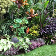 Tropical Plants Gardens Contrasting Form And Colour Gives Every Plant Visual Interest