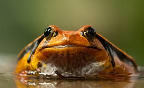 free stock photos of tomato frog pexels