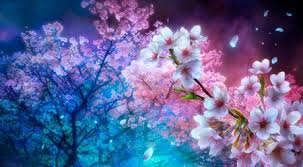 cherry blossoms flowers u0026 nature background wallpapers on