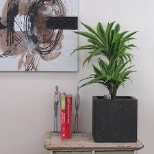 indoor plants u2013 bentleys