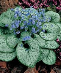 12 Best Annual Flowers For by 12 Best Gardening Images On Pinterest Gardening Activities And