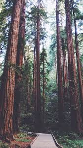 wallpaper tumblr forest 25 hottest iphone wallpapers on tumblr