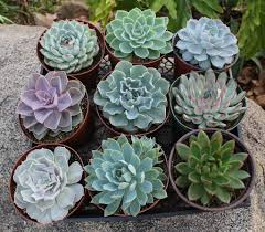 Succulent Planters For Sale by 6