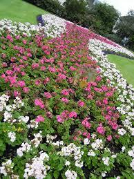 Flower Garden App by Garden Shape Ideas Learning How To Shape The Garden