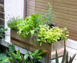 how to make a windowsill herb garden u0026 grow culinary herbs