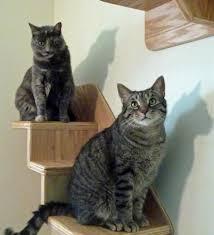 stylish cat tree pink sneakers stylish cat shelves wf
