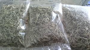 Teh Putih jualtehputih jual teh putih teh putih khasiat teh putih indonesia