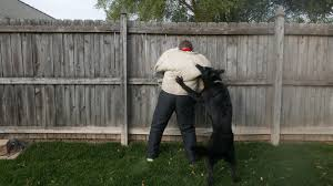 protection dog training protection dogs training ultimate k9
