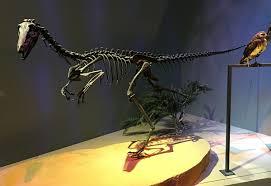 troodontidae wikipedia