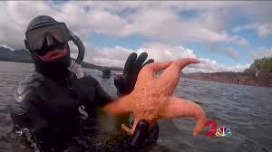 Alaska Snorkeling images Extreme alaska snorkeling in ketchikan jpg