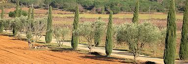 chambres d hotes dans les corbieres chambres d hotes pres de narbonne dans un domaine viticole des
