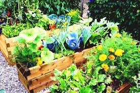 design backyard vegetable garden ideas best beautiful garden
