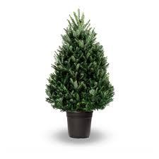 4ft christmas tree fraser fir real potted christmas tree