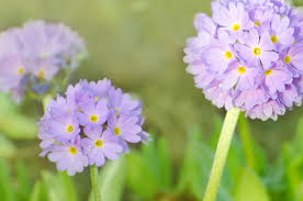 spring flower spring flowers free stock photo public domain pictures