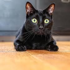 n2 cat crew home facebook