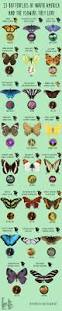 56 best insects images on pinterest beautiful bugs nature and