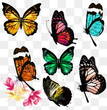 creative butterfly pattern creative butterfly orange png and