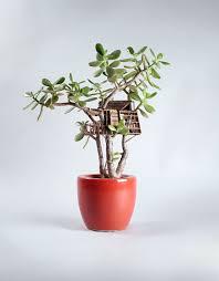 miniature tree houses for houseplants home design garden