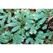 Canadian Garden Zones - 124 best zone 10 images on pinterest garden plants gardening