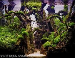 Aga Aquascaping Contest 1559 Best Aquarium Images On Pinterest Aquascaping Fish Tanks
