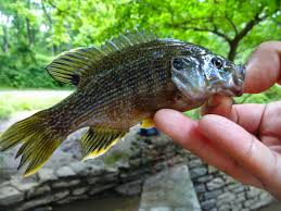 extreme philly fishing exploring the pennypack creek in northeast