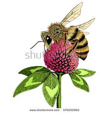 honey bee sketch stock images royalty free images u0026 vectors