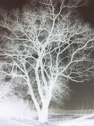 white tree white tree by subwolfsphere on deviantart