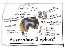 australian shepherd quotes the 17 best images about wiggle on pinterest