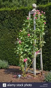 ornate rose trellis in the form of a bossed wooden obelisk stock