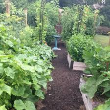 summer vegetable garden update tomato envy tomato envy
