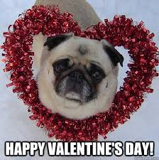 Cute Valentines Day Memes - happy valentine s day pug valentine quickmeme