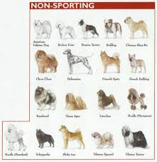 american eskimo dog varieties the 7 dog breed groups explained american kennel club