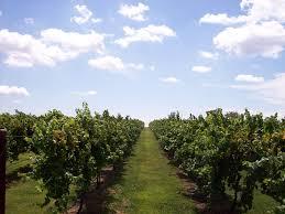 Pumpkins Galore Wright City Mo by Meyer Farms Inc Mo Wine