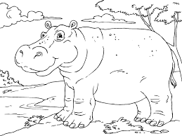hippo face coloring pages animal drawings coloring pages