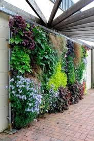 How To Plant A Drought Tolerant Living Wall Garden Walled Garden - Wall garden design