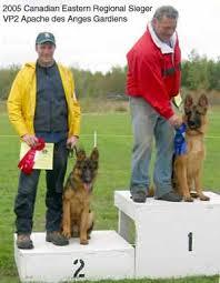 belgian shepherd quebec pictures of our german shepherd puppies les anges gardiens
