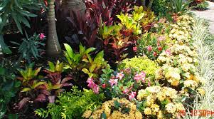 Tropical Landscaping Ideas by Tropical Landscape Ideas Pinterest Landscaping Gardening Ideas