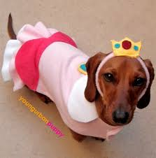 Cheap Dog Costumes Halloween 21 Cosplaying Doges Images Animals Animal