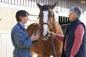 christmas presents for horse lovers pets4homes