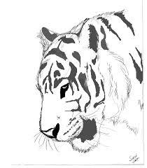 tiger sketch by themysticwolf on deviantart