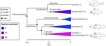the tree of life and a new classification of bony fishes u2013 plos