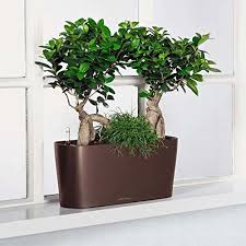 7 best self watering planters for indoors and outdoors
