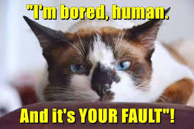 Bored Meme - i can has cheezburger bored funny animals online cheezburger