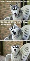 boxer dog jokes 25 best funny dog memes ideas on pinterest smiling dog meme