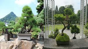 Botanical Garden Design by Bonsai Garden Design Small Garden Landscape Youtube