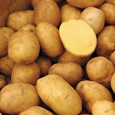 butterball applications organic non gmo german butterball potato