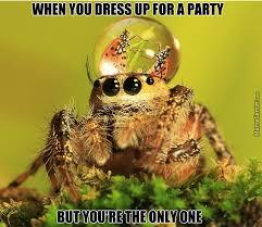 Spider Meme Misunderstood Spider Meme - awkward spider by rich231 meme center