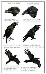 Crow Meme - crow meme totems pinterest animal medicine medicine and animal