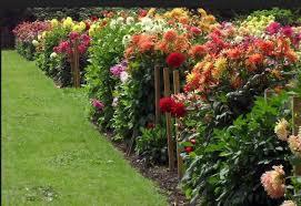 Club Summer Garden - lancaster garden club late summer glories planning the late